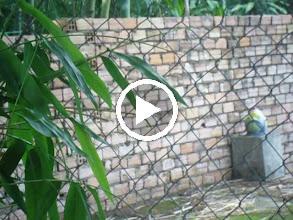 Video: SAM_0178 Tình Hình Hiện Tại Ở Gia Đình Tôi Ngày 12 06 2013