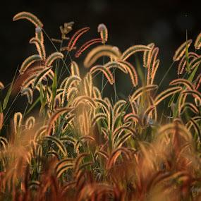 Catch the Light by Jim Crotty - Nature Up Close Trees & Bushes ( calm, beavercreek township, ohio, jim crotty, sunset, peace, summer, beauty, landscape, raptor ridge )