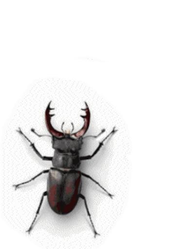 этот майский жук анимация охотится