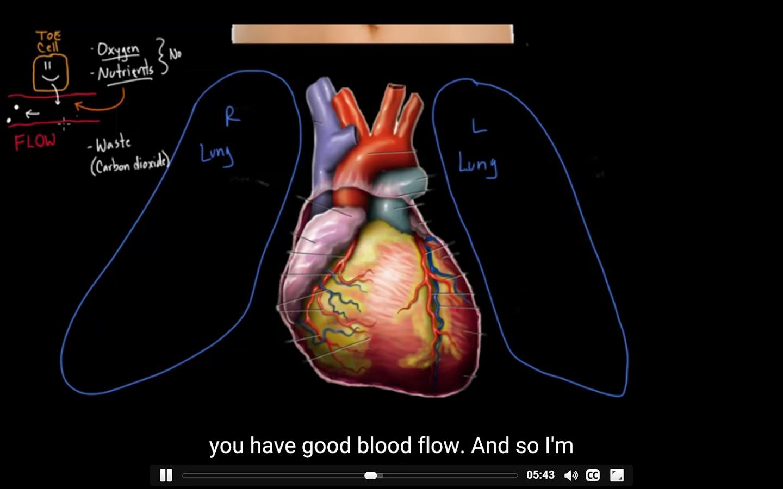 Anatomía del sistema cardiovascular - Aplicaciones de Android en ...