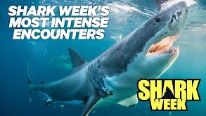 Shark Week's Most Intense Encounters thumbnail