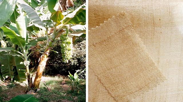 Banana tree and banana fabric
