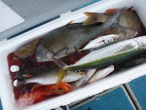 """Photo: 釣果です! """"クマガイさん""""の釣果。 潮が動かず大苦戦でした。"""
