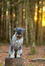 Photo: I skoven.