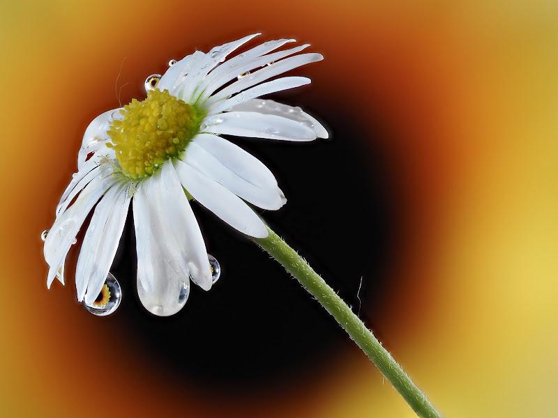Flowers di alagnol