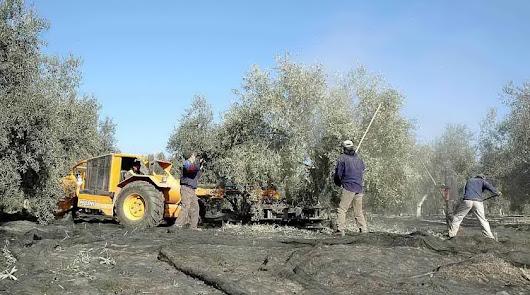 UPA Andalucía considera que las reducciones de IRPF serán beneficiosas