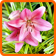 Quiz de flores