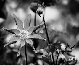 Photo: The pinwheel - © Ricardo Lagos - Creative Commons (CC BY-NC 3.0)