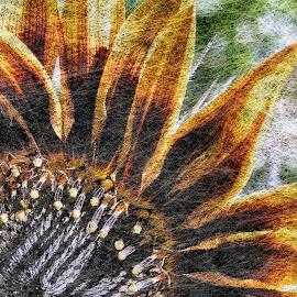 sunflower by Sue Rickhuss - Illustration Flowers & Nature
