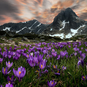 Crocuses and the peak by Atanas Donev - Landscapes Mountains & Hills ( crocuses, mountain, peak )