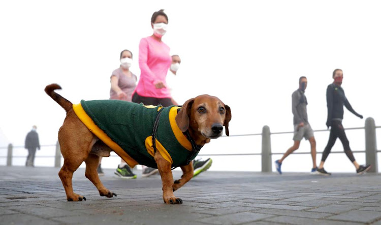It was a misty and cool morning, but that did not deter dogs and their owners from strolling on the Sea Point promenade in Cape Town.