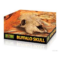 Buffel Skalle