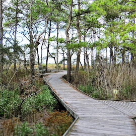 Boardwalk through the Assateague trail by Mary Gallo - City,  Street & Park  City Parks ( trail, nature, boardwalk, park, landscape,  )