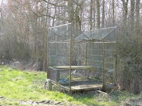 Photo: une cage pour attraper les pies ou les corbeaux