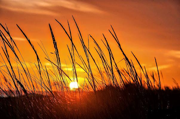 Passeggiando verso il sole! di Italo16