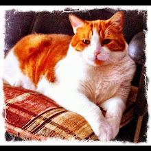 Photo: Cat portrait #intercer - via Instagram, http://instagr.am/p/KQk918pfjE/
