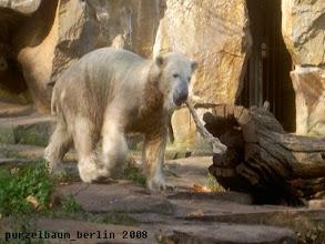 Photo: Knut hat auf der Anlage einen Ochsenschwanz entdeckt :-)