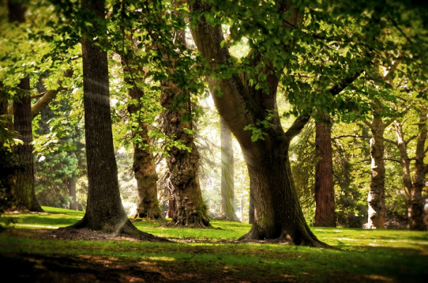Nel bosco....qualcosa accade di liamcoll