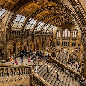 Natural Historical Museum by Nikolas Ananggadipa - Buildings & Architecture Public & Historical ( uk, england, building, london, architectural, architecture, museum,  )