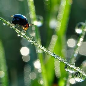 Good Morning Bug.. by Cibo Heriansyah - Nature Up Close Leaves & Grasses ( macro, nature, insect )