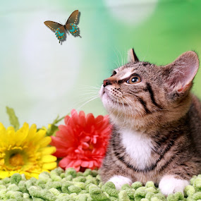 Chasing Butterflies by Ranee Rose - Animals - Cats Playing ( butterfly, kitten, cat, green, cute, cats, butterflies, spring summer, pets, whiskers, kittens, paws, flowers )