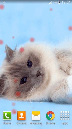 Kucing Wallpaper Hidup Hd Aplikasi Di Google Play