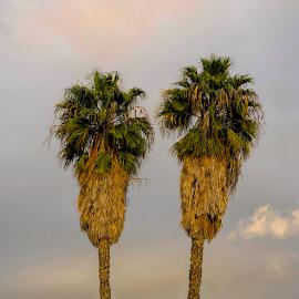 Treas by Fabienne Lawrence - Uncategorized All Uncategorized ( landscape photography, tall trees, trees, landscape )
