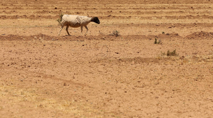 DIRE EMERGENCY: The drought has ravaged vast parts of the Eastern Cape