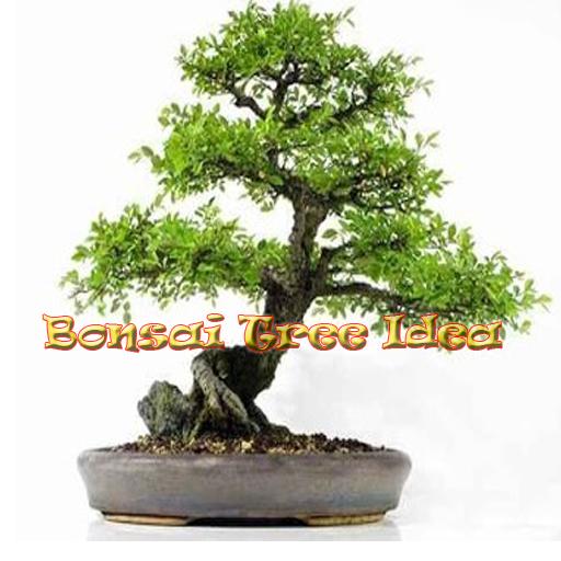 Bonsai Tree Idea