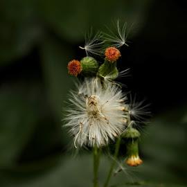Entangled by Mili Shrivastava - Nature Up Close Other plants ( nature, plant )