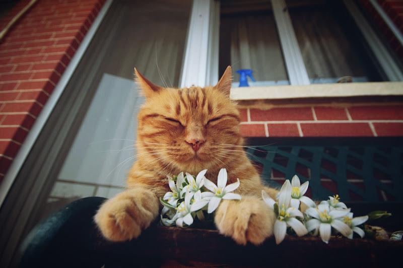 Un gatto va amato alle sue condizioni. di _iosonoMichele
