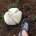 Giant Puffball
