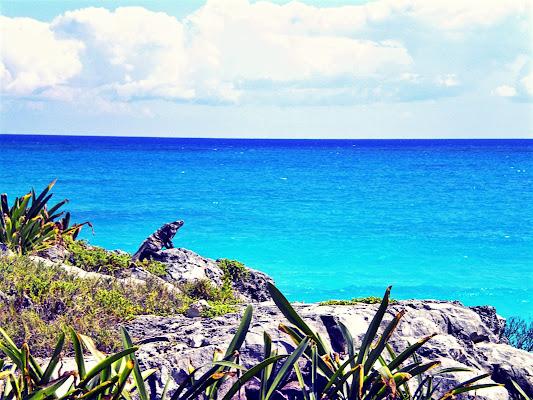 Wild ocean di Ale Brigante