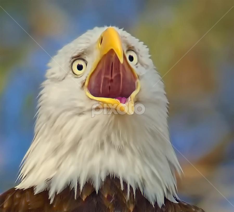 Bald Eagle Closeup by Don Holland - Animals Birds ( eagle, bald, shiloh, pine, closeup )