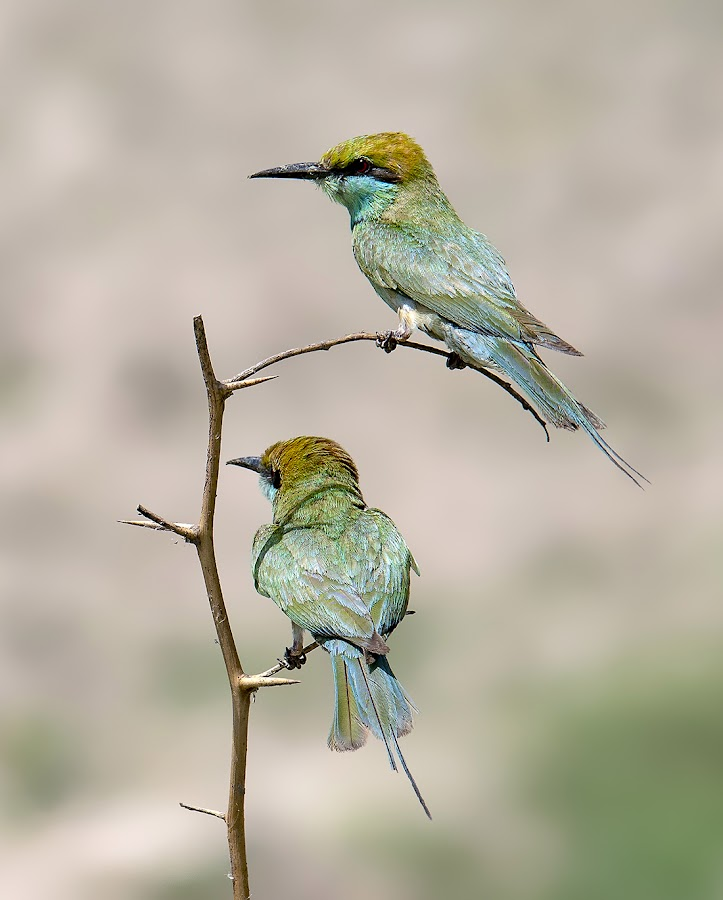 by Mohsin Raza - Animals Birds