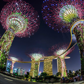 Supertree Grove by CK Lam - City,  Street & Park  City Parks ( gardens by the bay, supertree grove, singapore, marina bay )