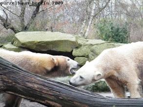 Photo: Was fluestert Gianna hier wohl Knut ins Ohr ?
