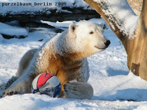 Photo: Gutgelaunter Knut mit Ball :-)