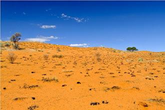 Photo: le dune del Kalahari