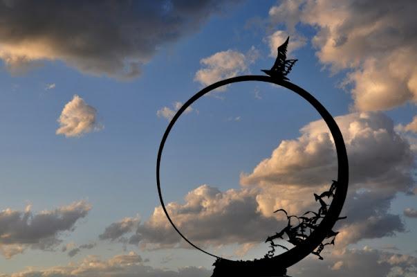 Il cerchio di Jonathan livingston di poppy