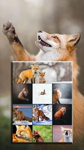 Fox Wallpaper - Gudelplay Apps 1.4