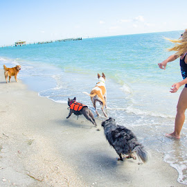 Go for it! by Meaghan Browning - Animals - Dogs Playing ( dogs, fetching, ocean, beach, variety )