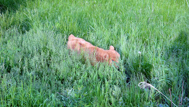 Photo: baby sal in deep pasture