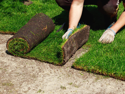 First Choice Landscaping is proud to provide services for the city of  Cherry Log, GA for Sod Grass . First Choice Landscaping has been servicing  its ... - First Choice Landscaping