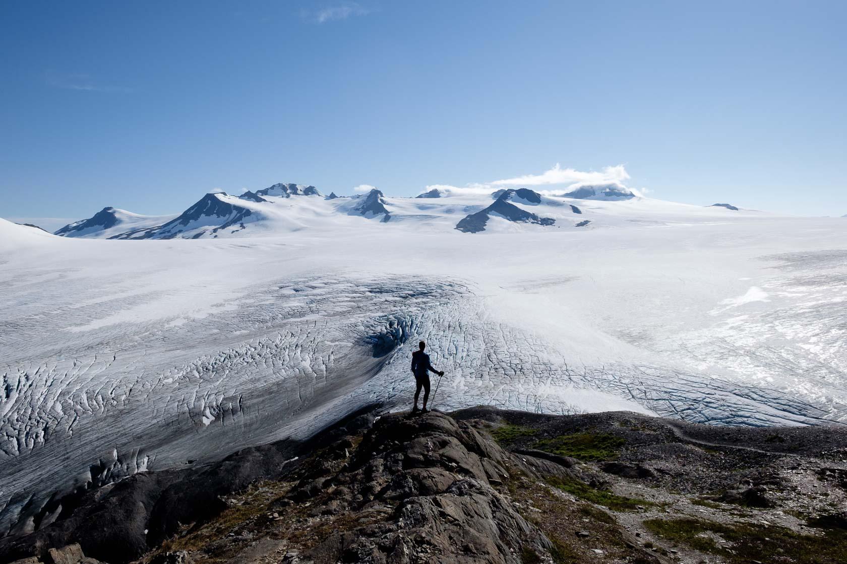 The end of the Exit Glacier Trail, None