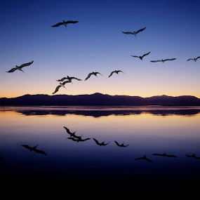 Salton Sea  by John CHIMON - Landscapes Waterscapes ( mountains, desert, california, sunset, sea, saltonsea, lake, salton, birds )