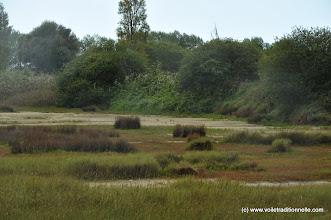Photo: Nous poursuivons de notre intérêt les limicoles dans les marais. Ici un courlis cendré que les limites de l'objectif présent préserve de toute indiscrétion.