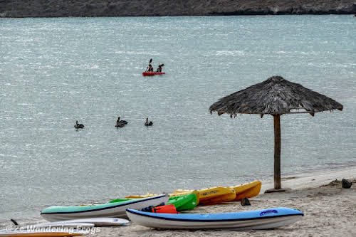 Things to Do in La Paz Mexico: Kayaking in Balandra Beach