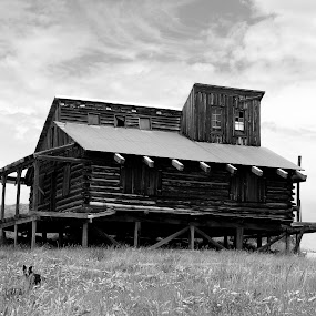 Time Again by Vanessa Latrimurti - Buildings & Architecture Homes ( cabin, old, black and white, colorado, western, dog, west, run down )