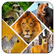 Wild Safari Quick Snapshot 3D